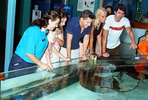 Underwater World - Attractions Brisbane