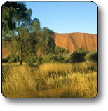 Uluru - Kata Tjuta National Park - Attractions Brisbane