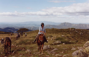 High Country Horses - Attractions Brisbane