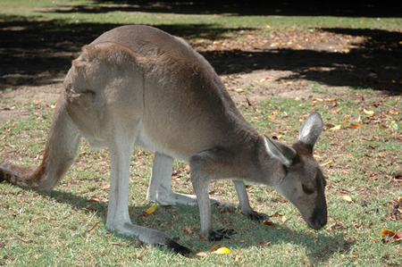 Bunbury Wildlife Park - Attractions Brisbane