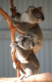 Waterways Wildlife Park - Attractions Brisbane