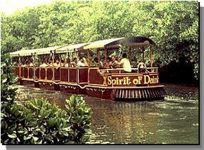 Daintree Rainforest River Trains - Attractions Brisbane