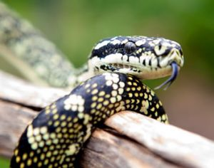 Reptile Encounters - Attractions Brisbane