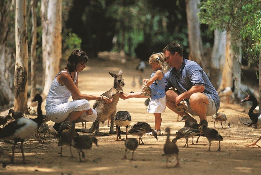 Billabong Sanctuary - Attractions Brisbane