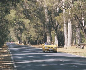Ludlow Tuart Forest - Attractions Brisbane