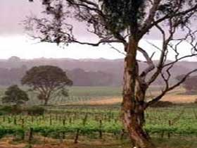 Yangarra Estate Vineyard - Attractions Brisbane