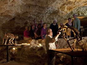 Naracoorte Caves National Park - Attractions Brisbane