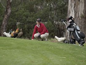 Tasmania Golf Club - The - Attractions Brisbane