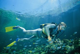 Kirra Reef Dive Site - Attractions Brisbane