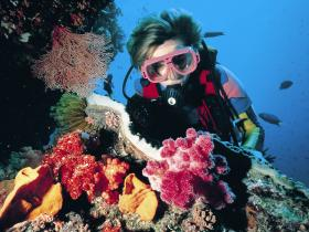 Nine Mile Reef Dive Site - Attractions Brisbane