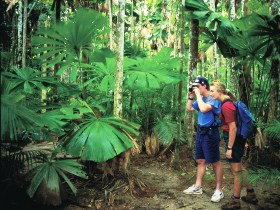 Mount Sorrow Ridge Trail Daintree National Park - Attractions Brisbane