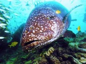Lady Musgrave Island Dive Sites - Attractions Brisbane