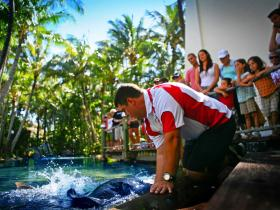 The Living Reef on Daydream Island - Attractions Brisbane