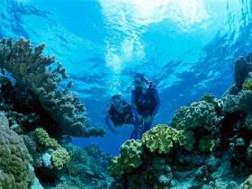Coral Gardens Dive Site - Attractions Brisbane