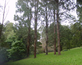 Mount Dandenong Arboretum - Attractions Brisbane