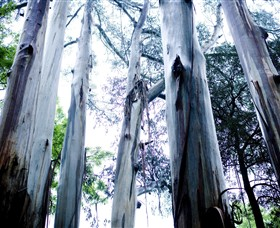Dandenong Ranges National Park - Attractions Brisbane