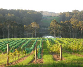 Tilba Valley Wines - Attractions Brisbane