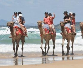 Camel Rides with Coffs Coast Camels - Attractions Brisbane