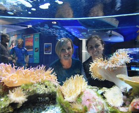 Solitary Islands Aquarium - Attractions Brisbane
