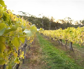 Harcourt Valley Vineyards - Attractions Brisbane