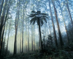 Yarra Ranges National Park - Attractions Brisbane