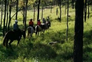 Hunter Valley Horse Riding and Adventures - Attractions Brisbane