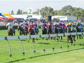 Morphettville Racecourse - Attractions Brisbane