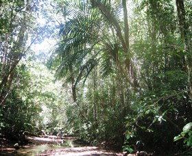 Mount Lewis National Park - Attractions Brisbane