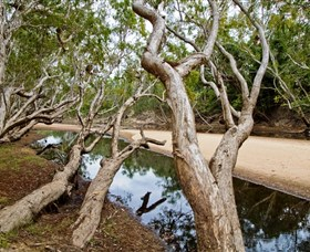 Oyala Thumotang National Park CYPAL - Attractions Brisbane