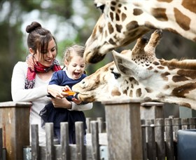 Taronga Western Plains Zoo Dubbo - Attractions Brisbane