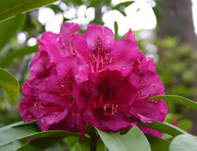 Campbell Rhododendron Gardens - Attractions Brisbane