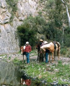 Yarramba Horse Riding - Attractions Brisbane