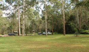Mill Creek picnic area - Attractions Brisbane