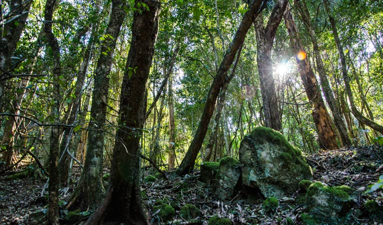 Copeland Tops State Conservation Area - Attractions Brisbane