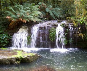 Barrington Tops National Park Walks - Attractions Brisbane