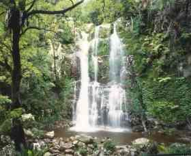 Budderoo National Park - The Falls Walk - Attractions Brisbane