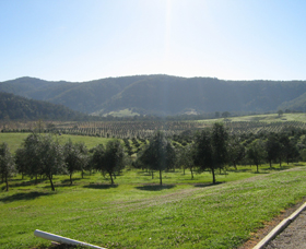 Hastings Valley Olives - Attractions Brisbane