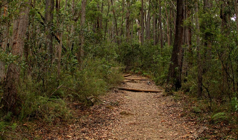 Pigeon House Mountain Didthul walking track - Attractions Brisbane