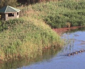 Spring Creek Bird Hide - Attractions Brisbane