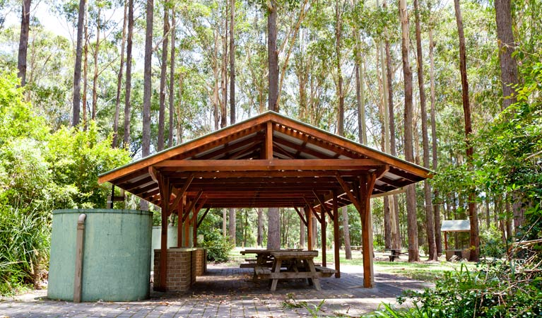 Bongil picnic area - Attractions Brisbane
