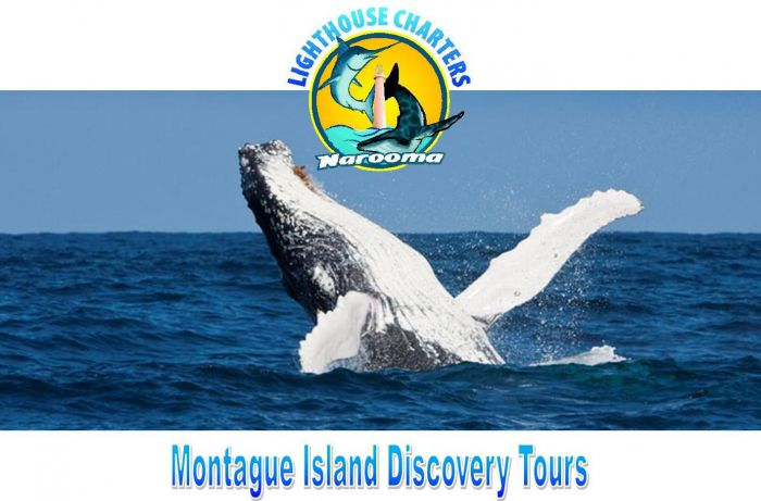 Lighthouse Charters Narooma - Attractions Brisbane