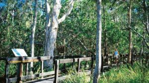 Kinaba Track - Attractions Brisbane