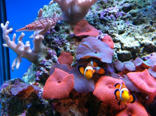 Tropical Marine Centre - Attractions Brisbane
