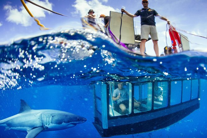 White Shark Tour with Optional Cage Dive from Port Lincoln - Attractions Brisbane