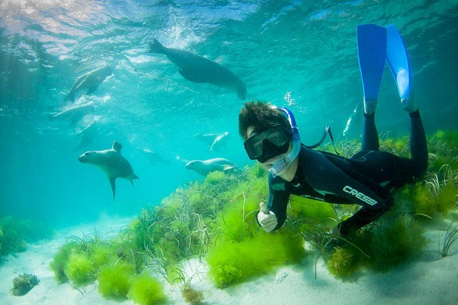 Half-Day Sea Lion Snorkeling Tour from Port Lincoln - Attractions Brisbane