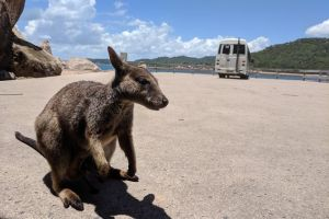 Magnetic Island Tour Maggie Comprehensive - Attractions Brisbane