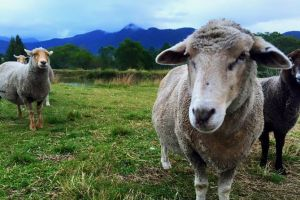 Trevena Glen Farm Animal Experience - Attractions Brisbane