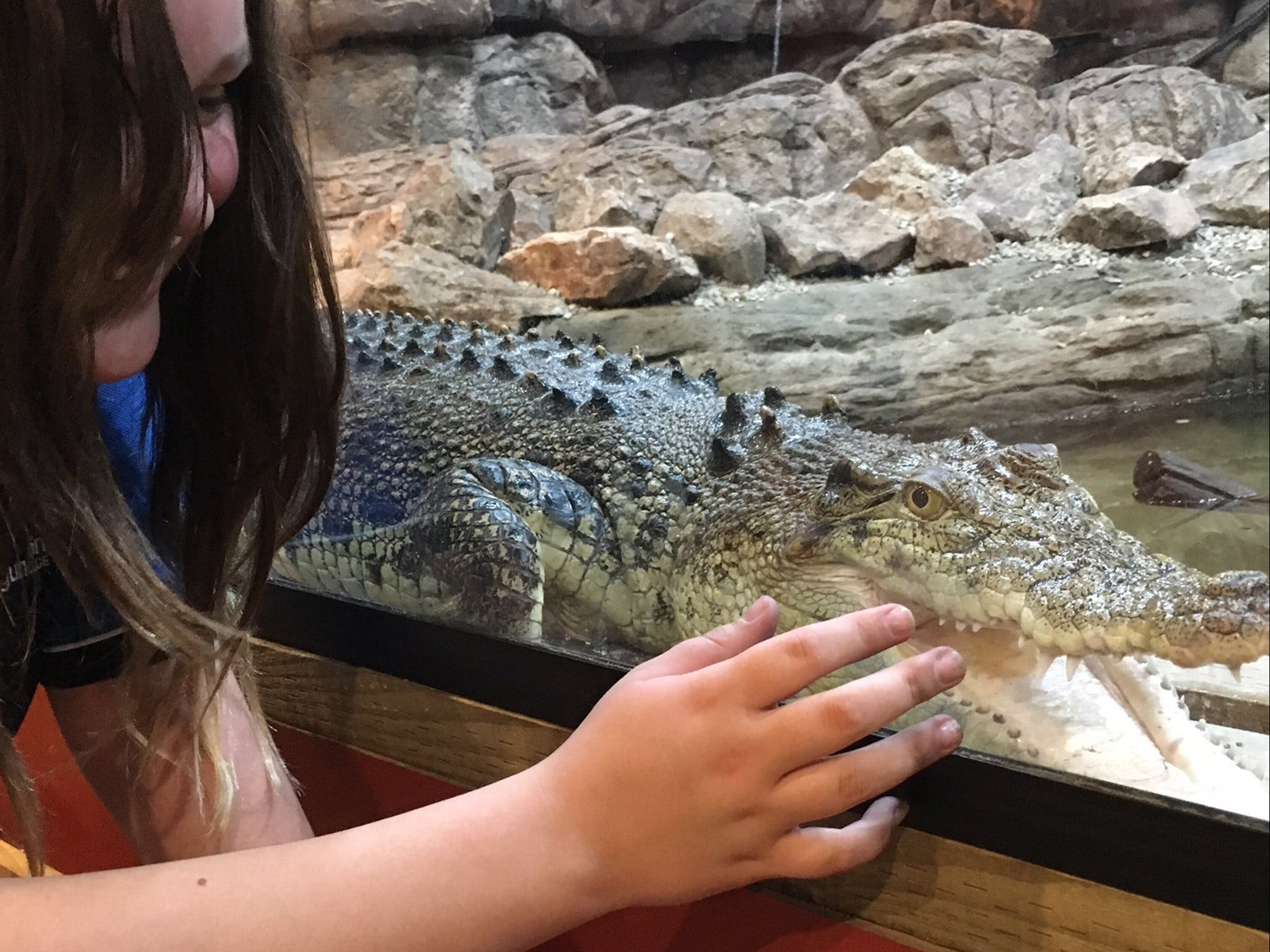 Canberra Reptile Zoo - Attractions Brisbane
