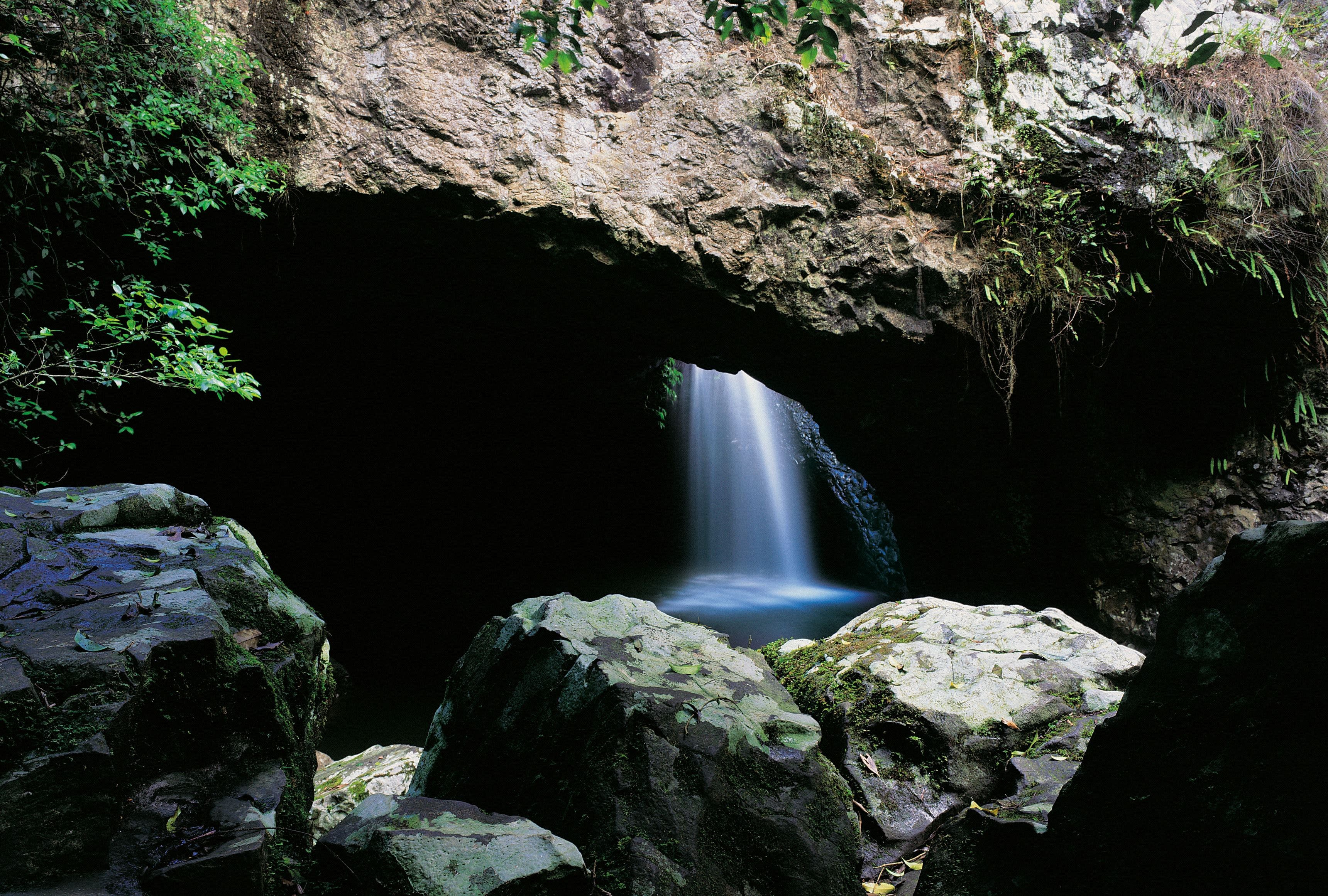 Natural Bridge Circuit Springbrook National Park - Attractions Brisbane