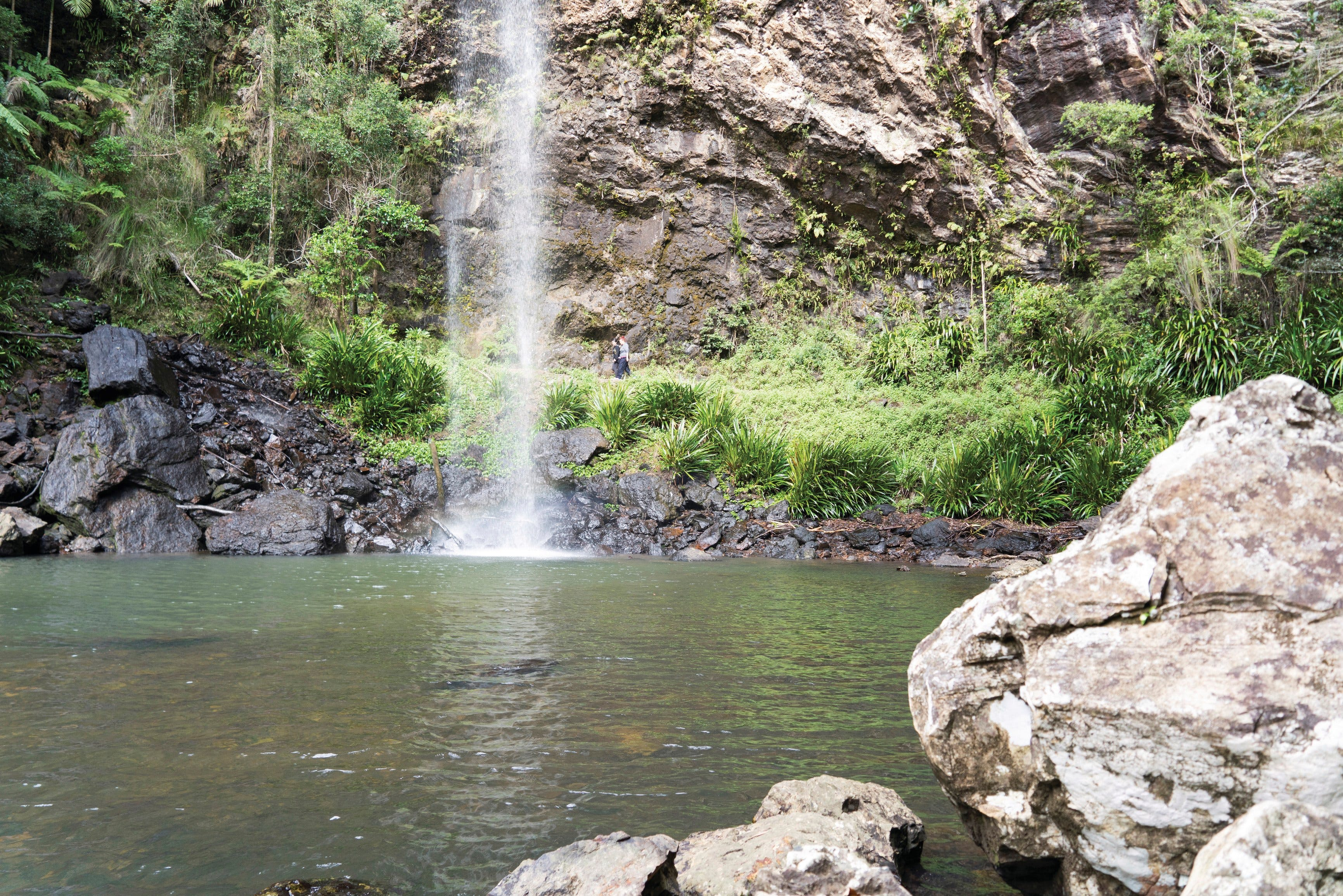 Twin Falls Circuit Springbrook National Park - Attractions Brisbane